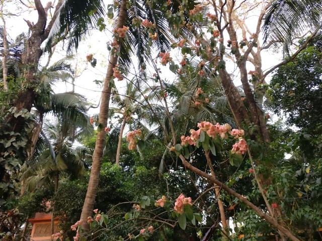 Flowers at Kairali Village