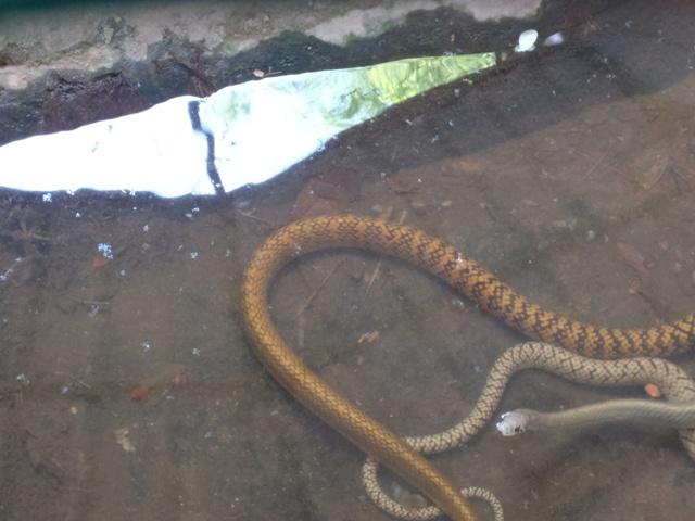 Snake Village at Palakkad
