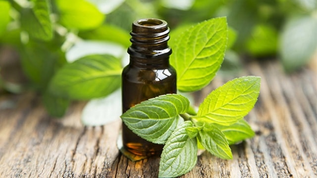 Best Essential Oils for weight loss - Peppermint Essential Oil